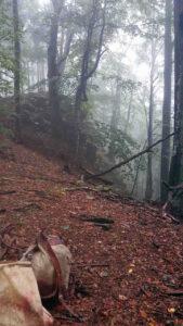 jagt i rumænien