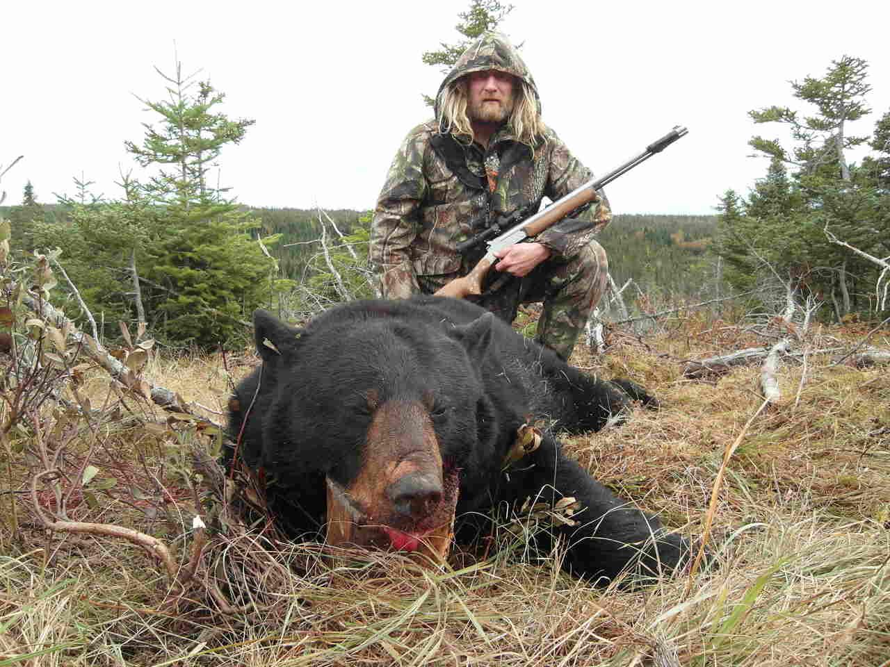Bjørnejagt, sortbjørn