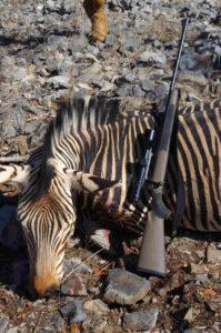 Jagt på Zebra, safari