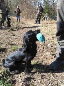 apportering, hundetræning