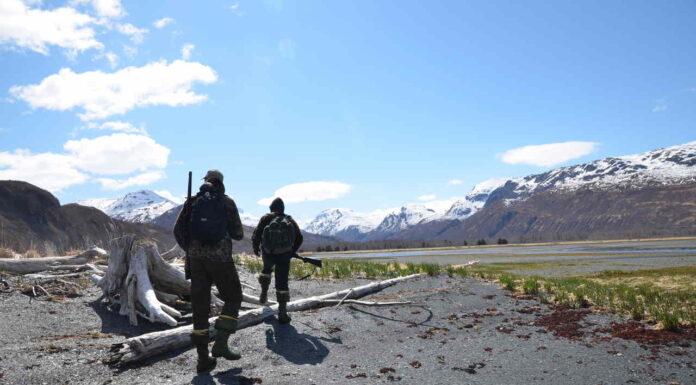bjørnejagt på kodiak island