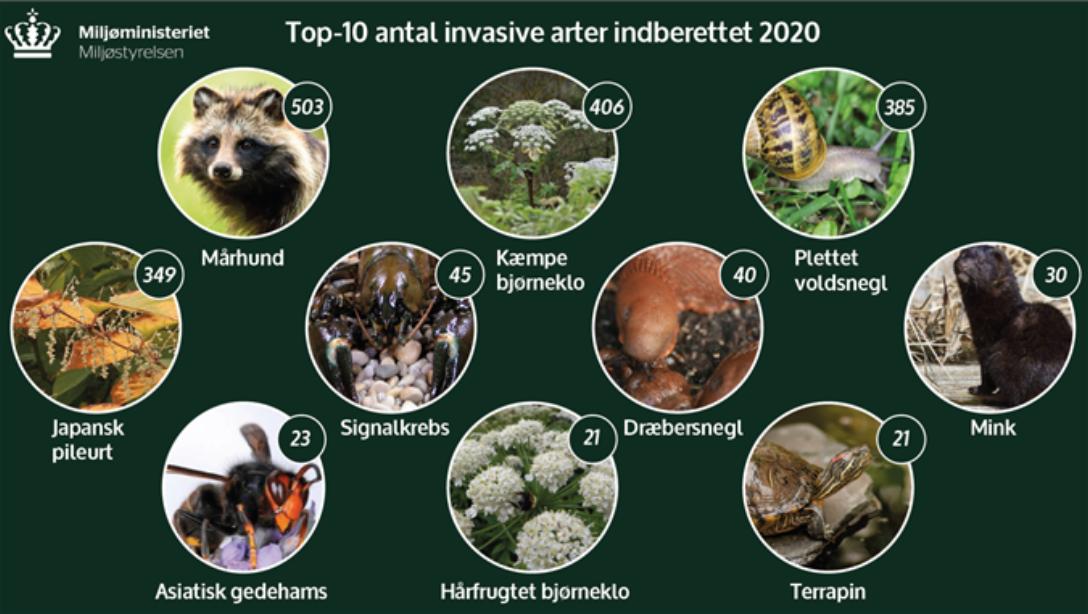 invasive arter