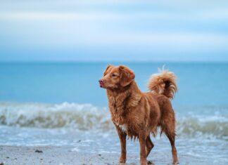 Hunde på strand