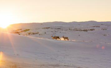 Ivaag grønland