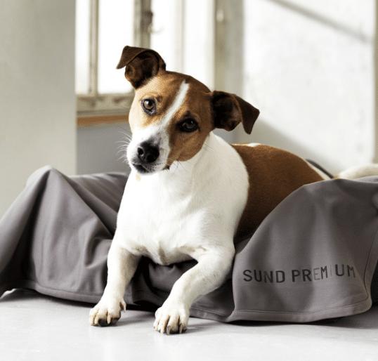 beskyt hunden mod flåt bid med insect shield